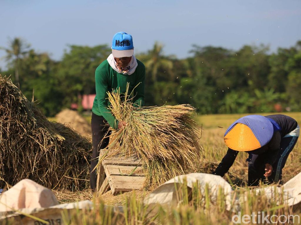 Jokowi Dorong Inovasi Baru untuk Kembangkan Sektor Pangan