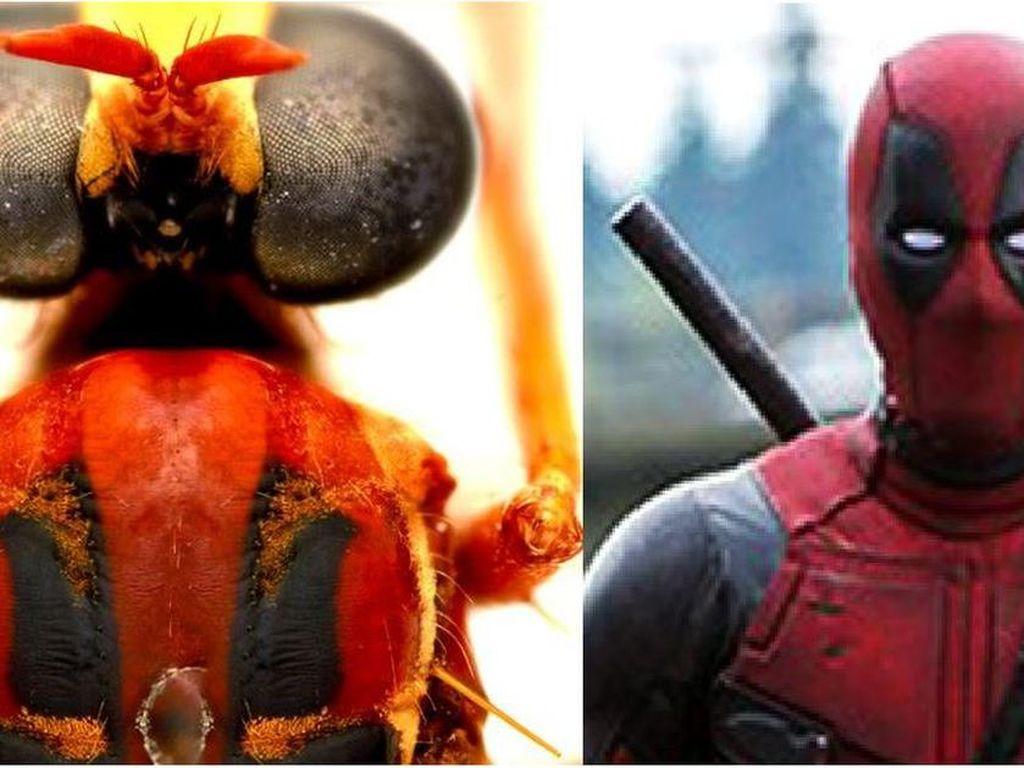 Terinspirasi Marvel, Deadpool hingga Loki Jadi Nama Spesies Serangga Baru