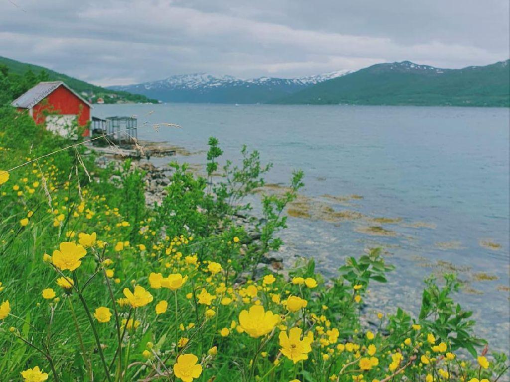 Foto: Utara Bumi yang Penuh Bunga