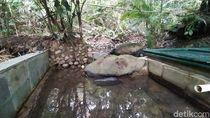 Foto: Mata Air di Ciamis yang Konon Bisa Sembuhkan Penyakit
