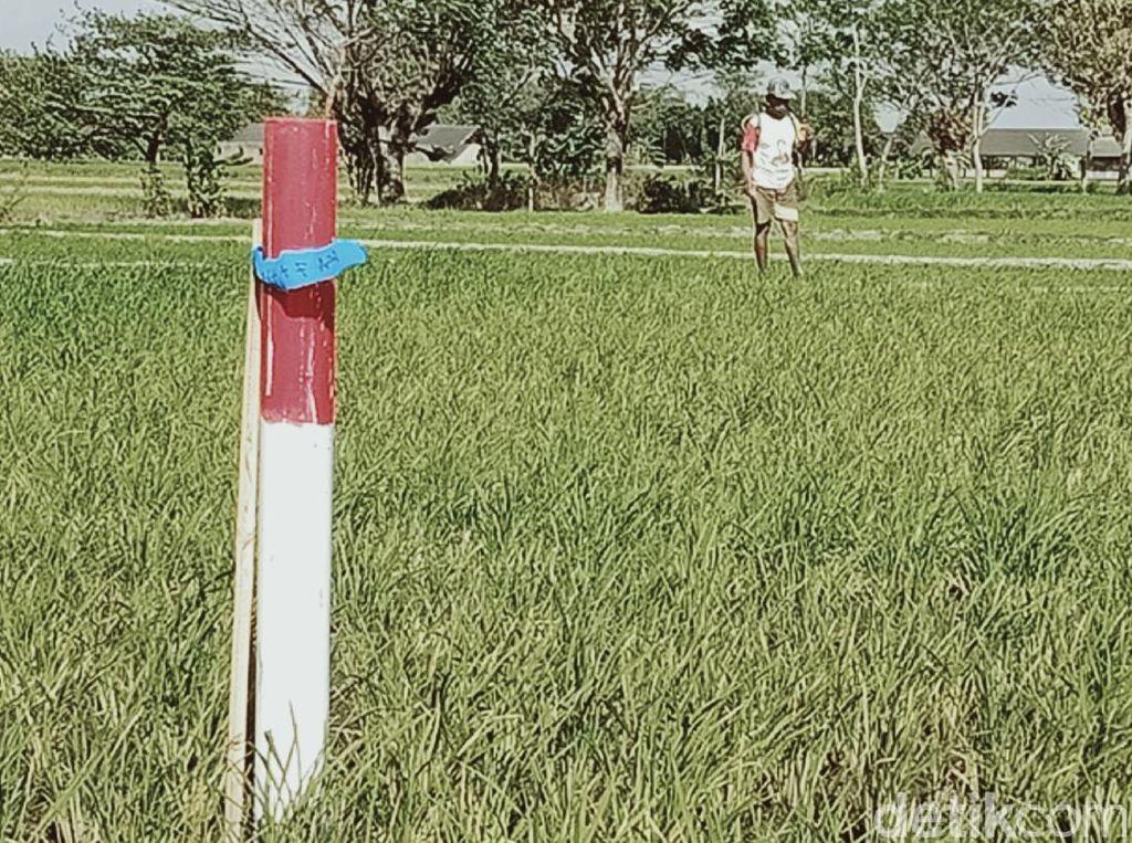 Patok Tol Yogyakarta-Solo Mulai Dipasang, Ini Penampakannya