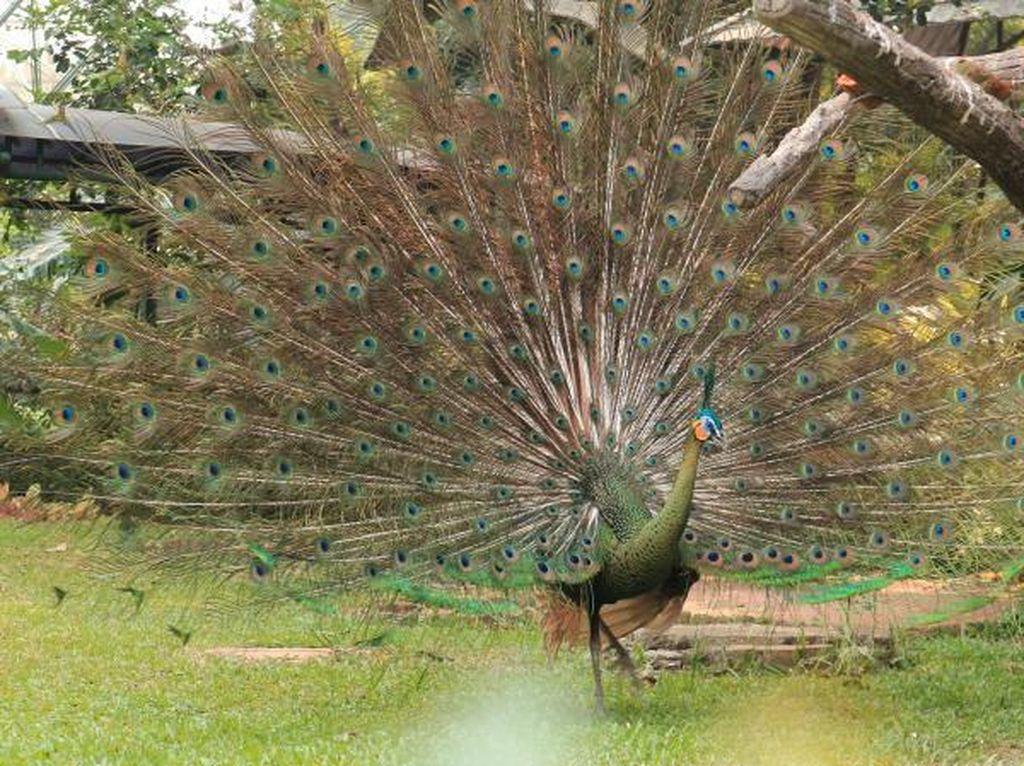 Lihat Ratusan Unggas di Taman Burung Jakarta