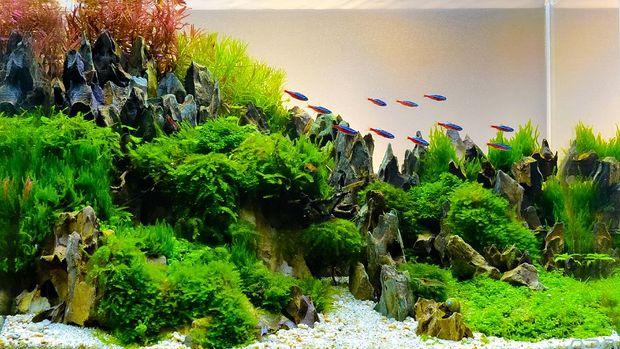 tanaman akuarium aquascape