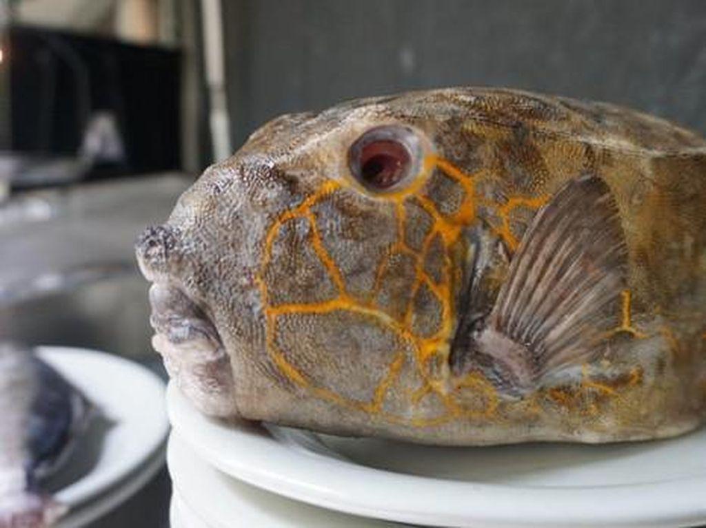 Bikin Laper! Puas Makan Ikan Kudu-kudu Sambal Rica yang Endolita