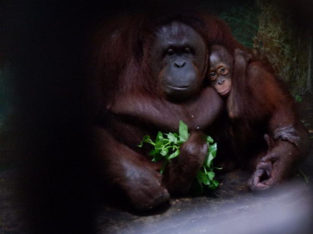 Serulingmas Zoo di Banjarnegara Diskon Karcis Hanya Goceng