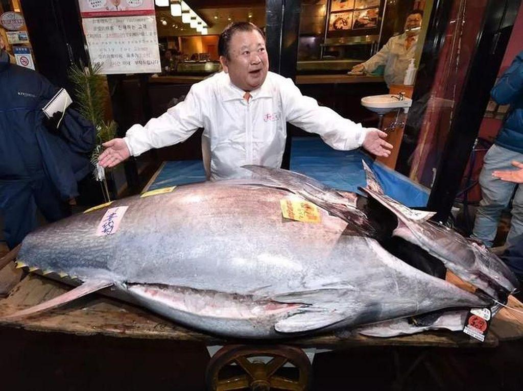 Ini 5 Ikan Paling Mahal di Dunia yang Jadi Makanan Mewah