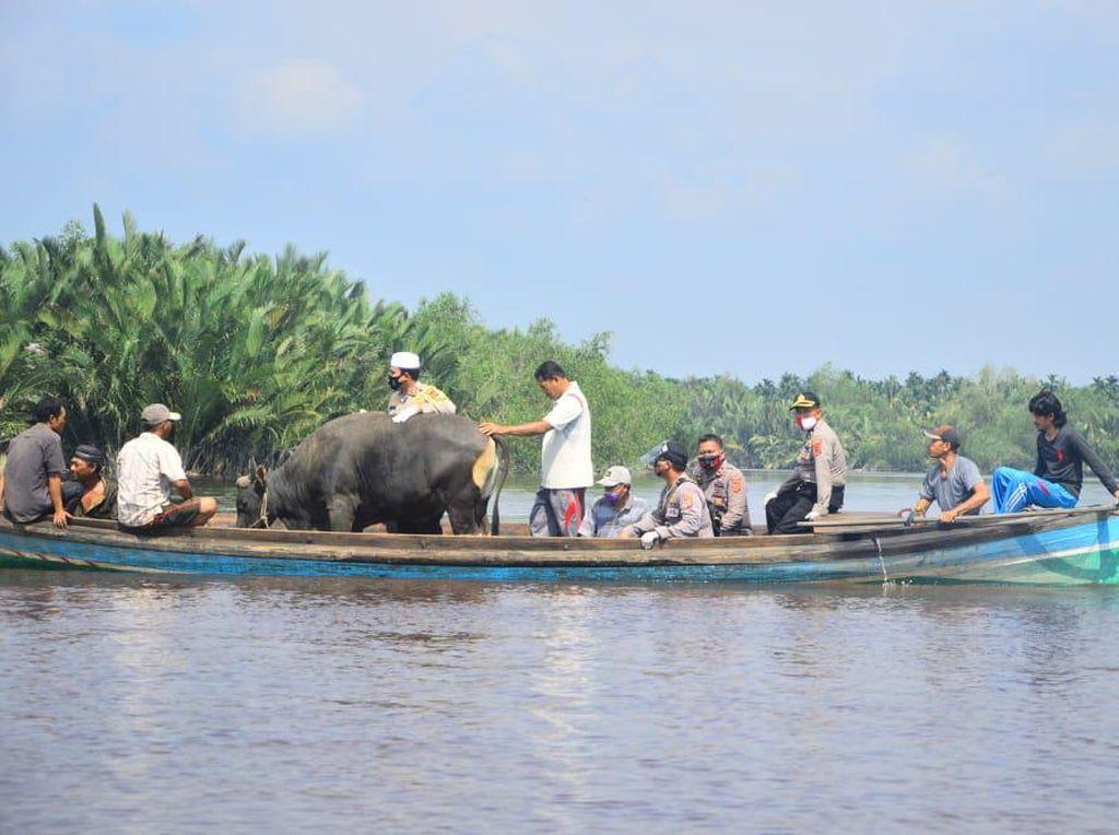 Polisi Antarkan Sapi Kurban dengan Perahu untuk Warga Desa Terisolasi di Jambi
