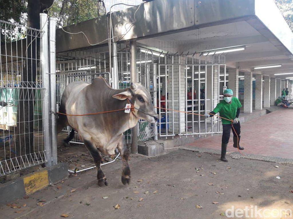 Masjid Istiqlal Bagikan 7.500 Paket Daging Kurban ke Masyarakat