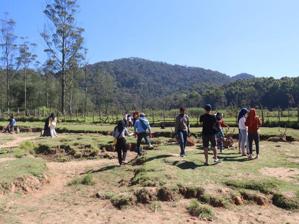 Bermain Bersama Rusa di Kampung Cai Ranca Upas