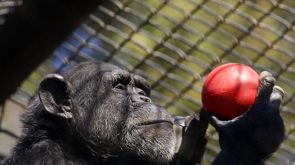 Kebun Binatang di Amerika Bertahan dari Krisis Imbas Pandemi