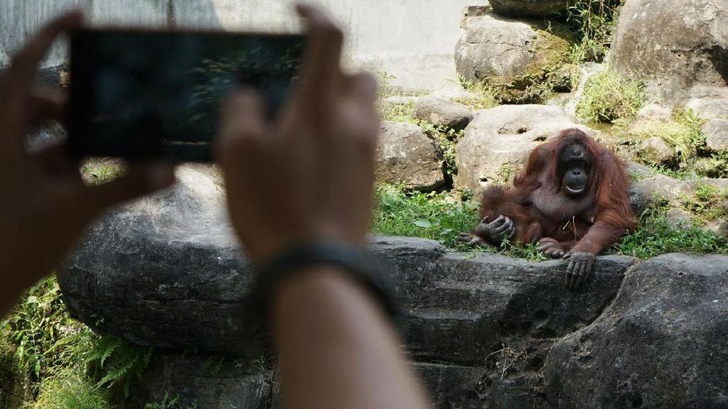 Gembira Loka Zoo Kembali Dibuka dengan Protokol Kesehatan