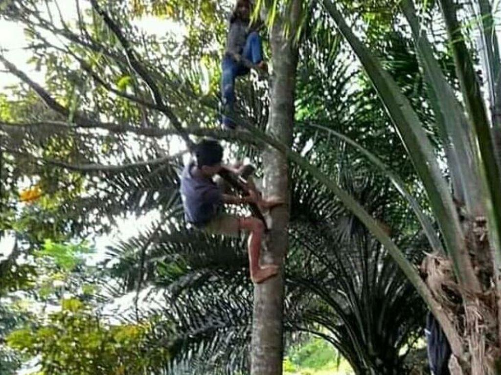 Viral Siswa di Simalungun Panjat Pohon demi Belajar Daring, Begini Ceritanya
