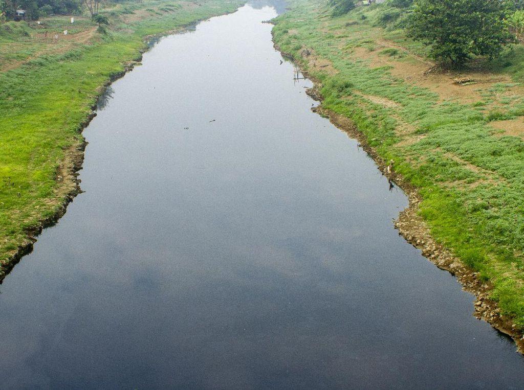 Ekosistem: Pengertian, Jenis, dan Komponennya Lengkap