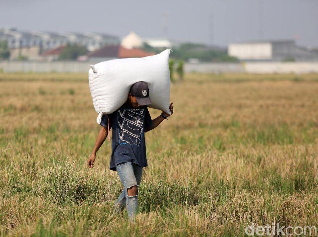 Daya Tahan Pertanian dan Kesejahteraan Semu Petani