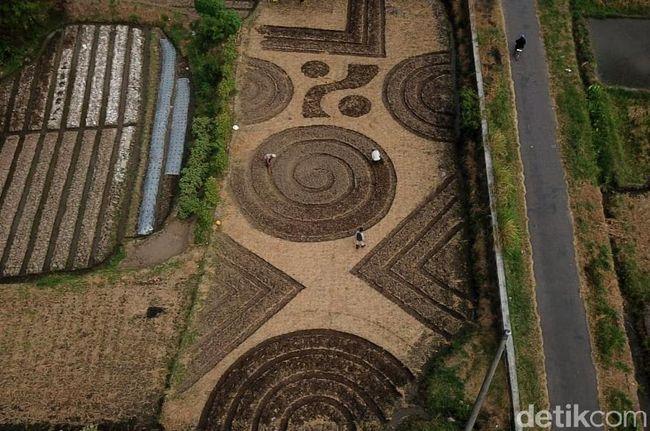 Foto-foto 'Crop Circle' yang Geger di Klaten