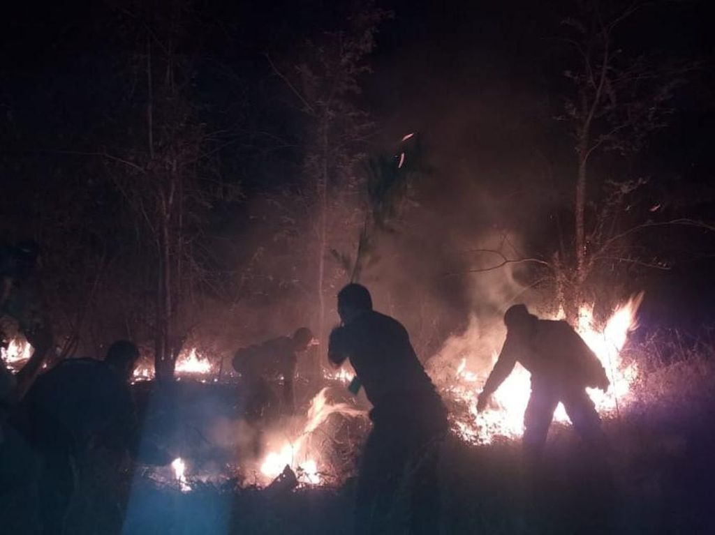 Hutan Baluran di Situbondo Terbakar