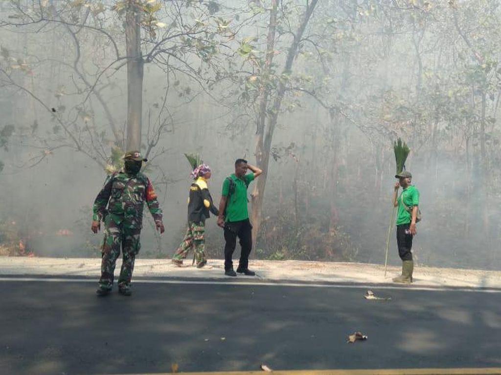Hutan Baluran Terbakar, Polisi Ancam Tindak Tegas Pelaku