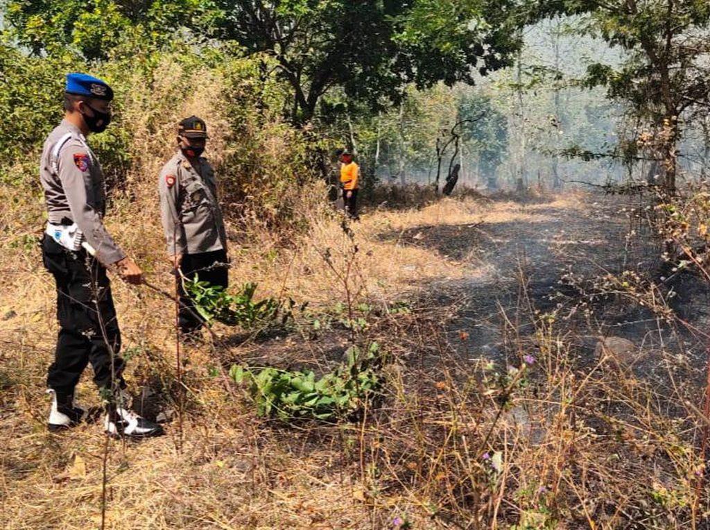 Hutan Baluran Situbondo Kembali Terbakar