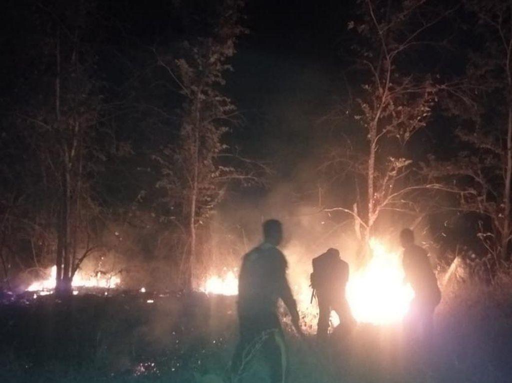 Puntung Rokok Diduga Jadi Penyebab Hutan Baluran di Situbondo Terbakar