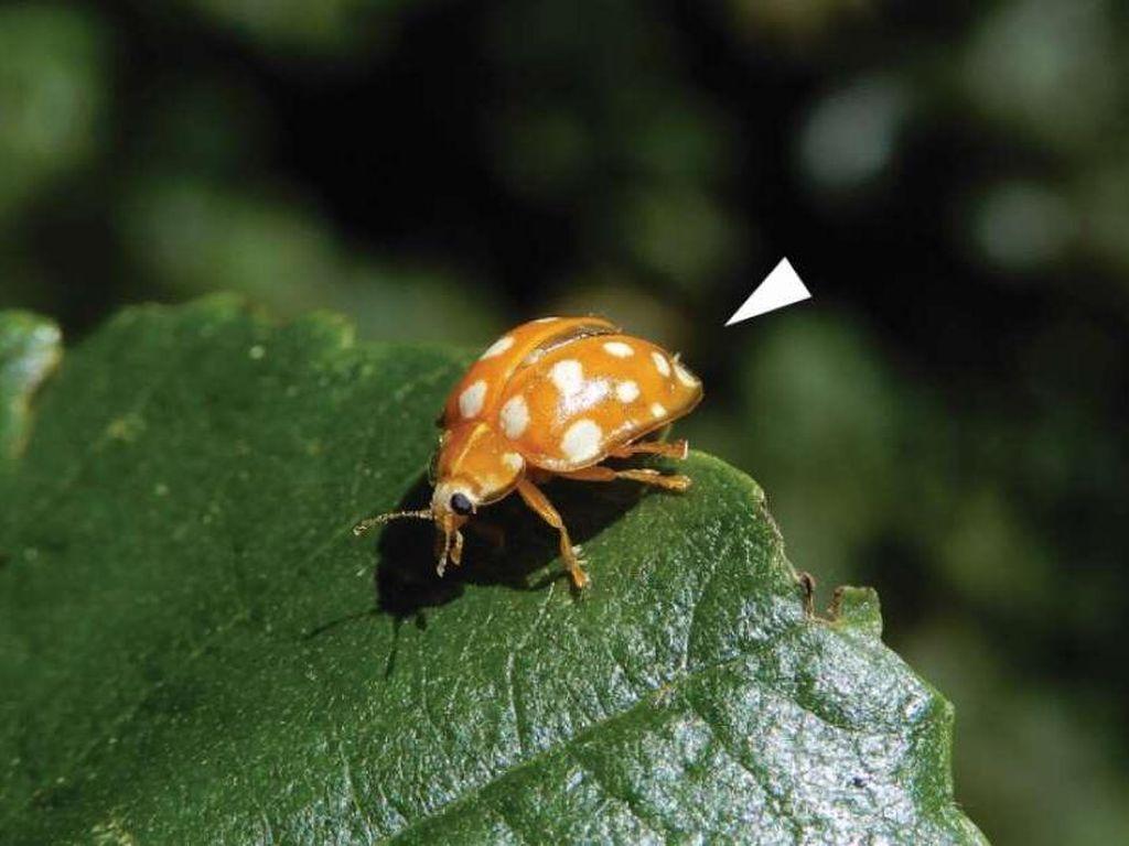 Ditemukan Spesies Jamur Baru, Namanya Karantina