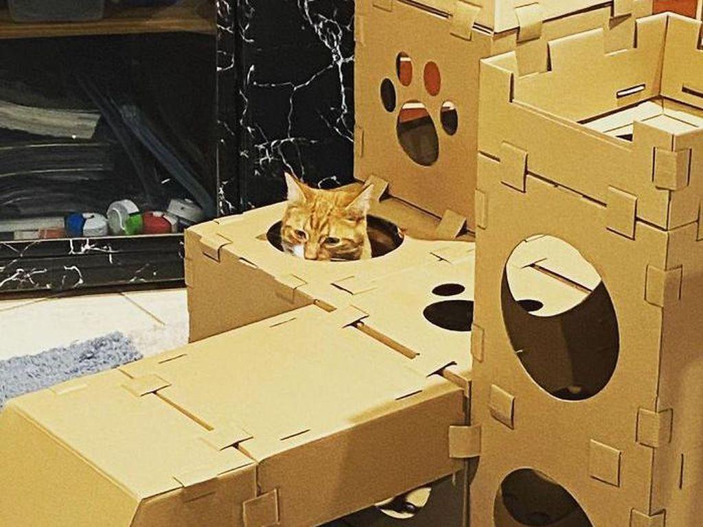 Gemasnya! Kumpulan Rumah Kucing Terbuat Dari Karton