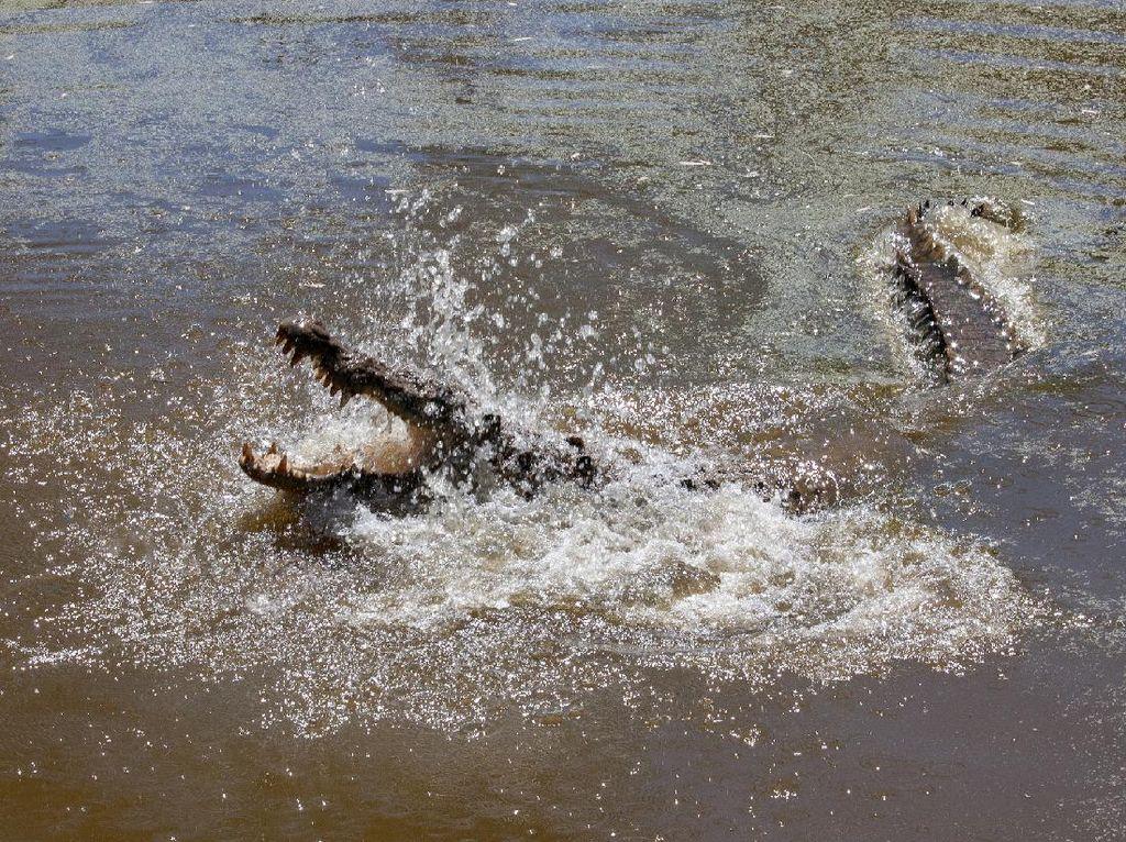Remaja di Bontang Kaltim Diserang Buaya Saat Berenang