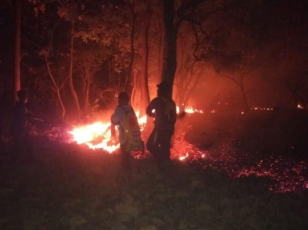 Dua Kali Kebakaran di Hutan Baluran Hanguskan 5,2 Hektare Lahan