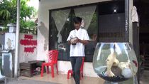 Inspiratif! Pelajar di Parepare Beli Kuota untuk PJJ dari Hasil Jualan Cupang