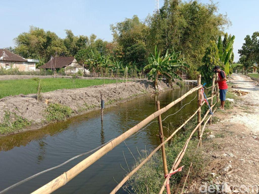 Salut! Pemuda Lamongan Sulap Saluran Irigasi Jadi Tempat Budi Daya Ikan