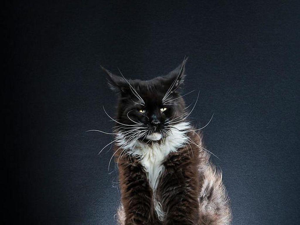 Foto: Gemasnya Pose Kucing yang Jadi Penguin