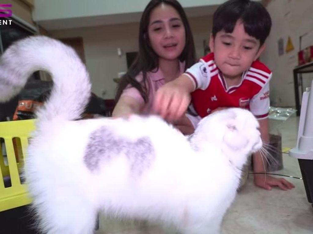 Seharga Rp 50 Juta, Kucing Nagita Slavina dan Rafathar Punya Paspor!