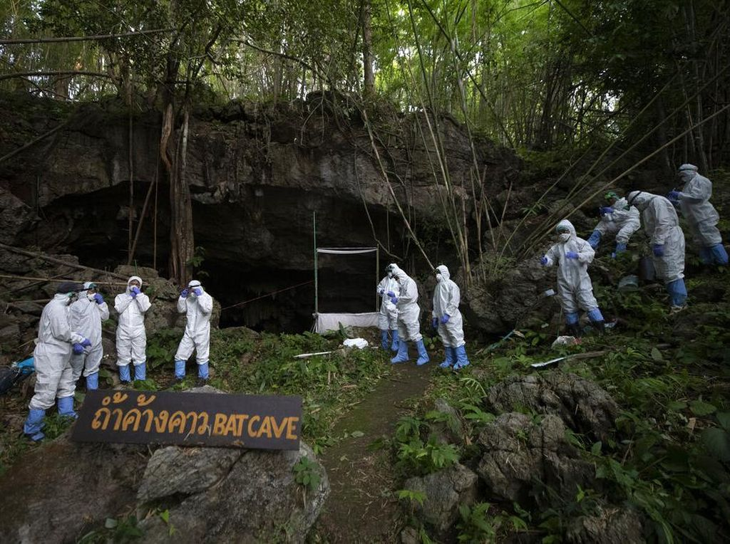 Ilmuwan Thailand Berburu Kelelawar untuk Lacak Asal Usul Corona