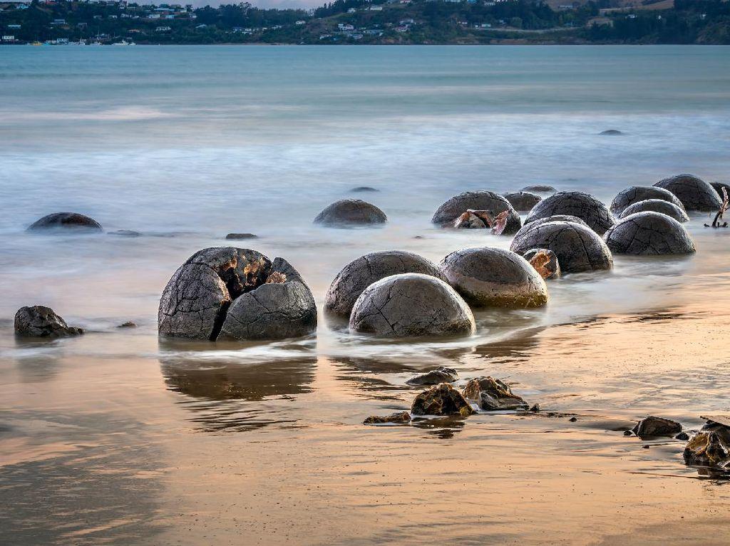 Unik Nih, di Pantai Selandia Baru Ada Telur Naga