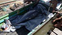 Seekor Pesut Ditemukan Mati di Sungai Mahakam
