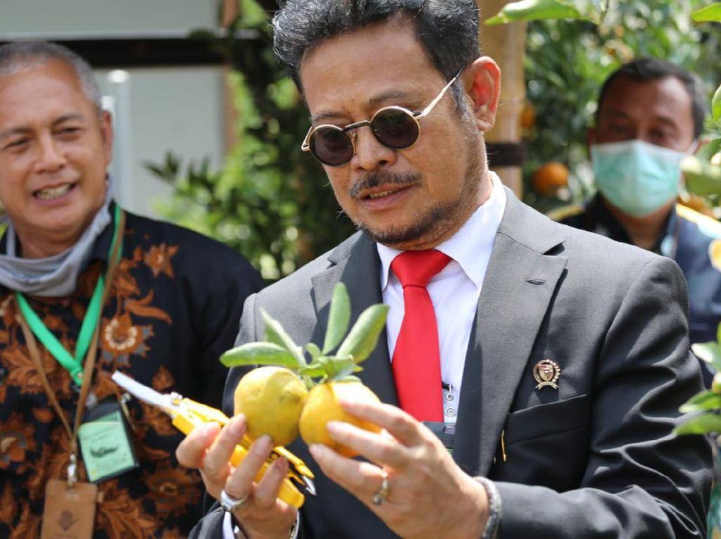 Mentan Dukung Pengembangan Inovasi Tanaman Jeruk Bebas Penyakit