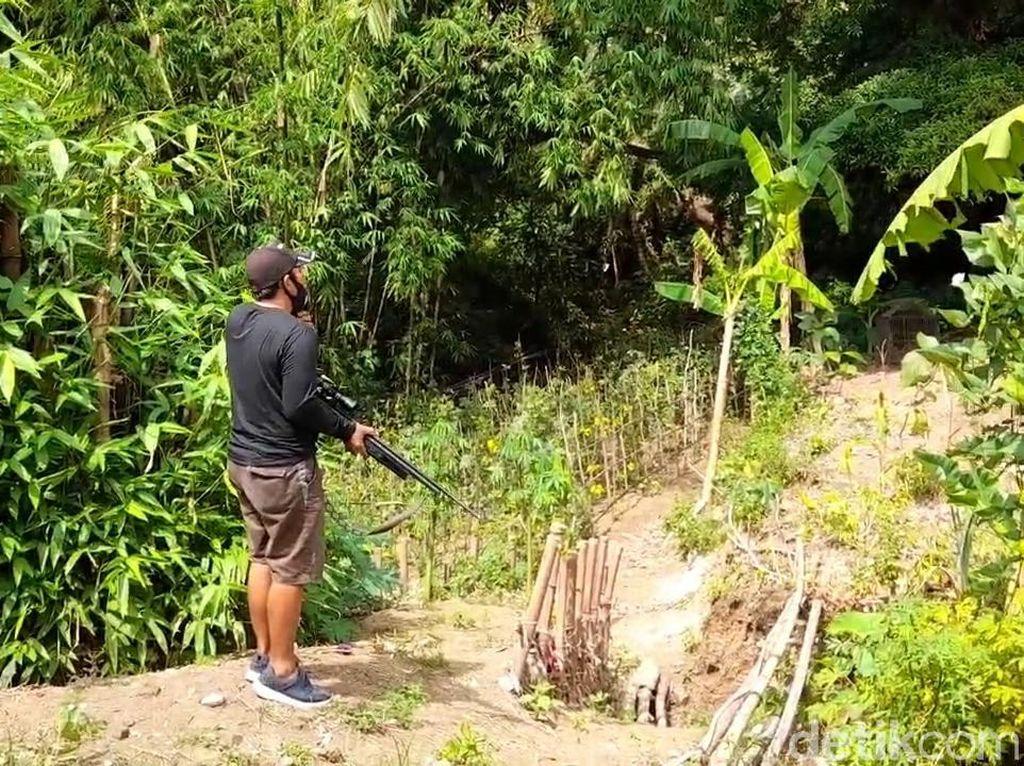 Diserang Monyet Liar, Warga Brebes Pasang Jebakan-Datangkan Penembak