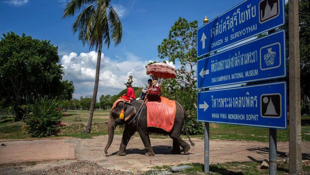 Asyik! di Thailand Udah Bisa Nunggang Gajah Lagi Lho