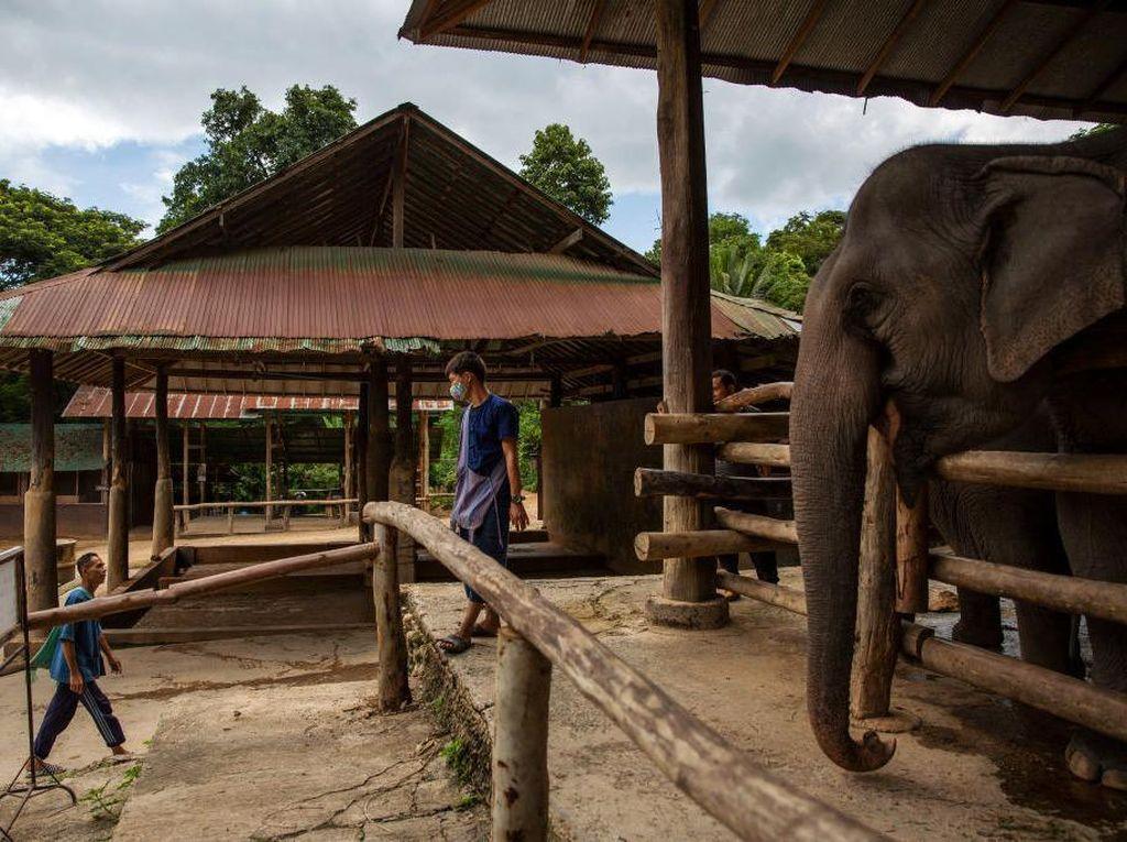 Gemasnya Gajah yang Minta Dinyanyiin Nina Bobo