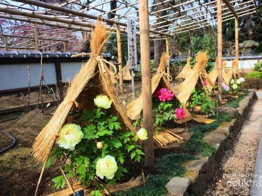 Di Jepang Bunga Saja Pakai Topi