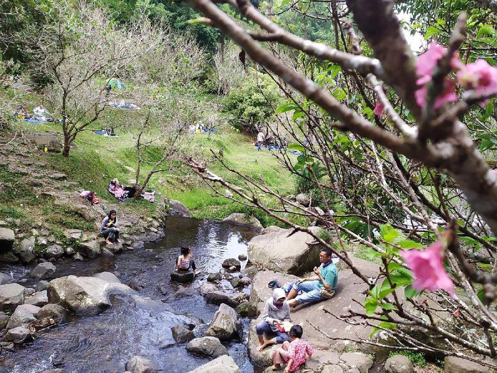 Foto: Serasa di Jepang, Padahal di Kebun Raya Cibodas