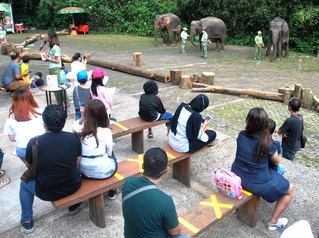 Libur Panjang, Kebun Binatang di Bogor Diserbu Wisatawan