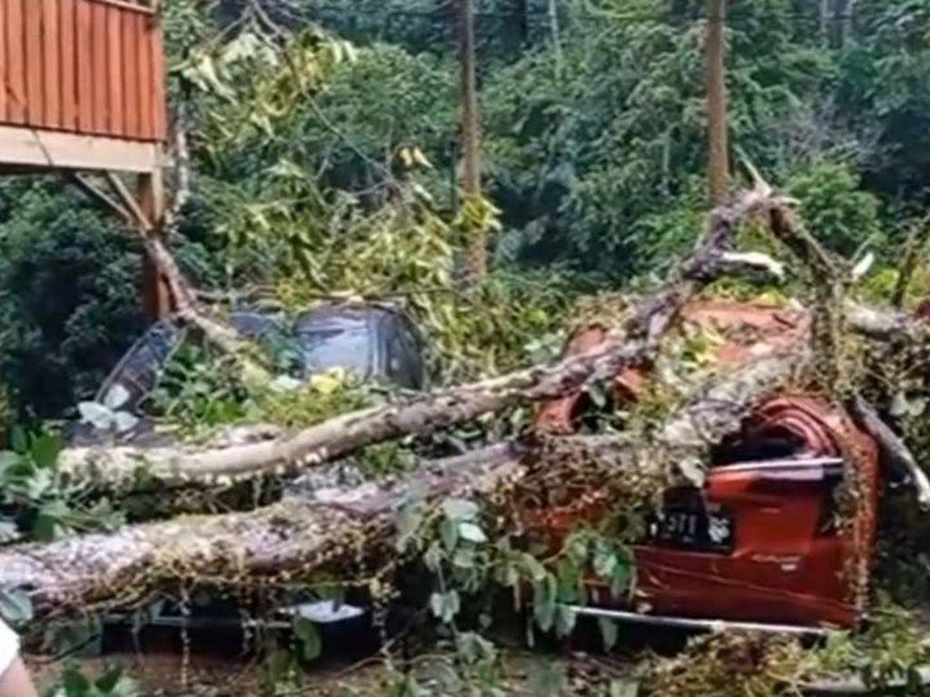 Hujan Deras-Angin Kencang di Mamuju, 3 Mobil Ringsek Tertimpa Pohon Tumbang