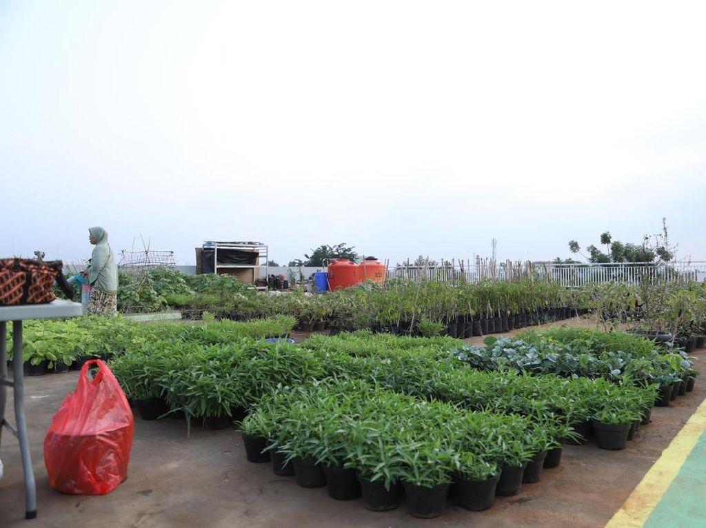 Mengintip Urban Farming Ala Ustadz Yusuf Mansur