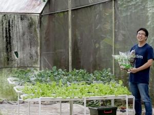 Renyahnya Peluang Bisnis Urban Farming, Cara Berkebun Kekinian