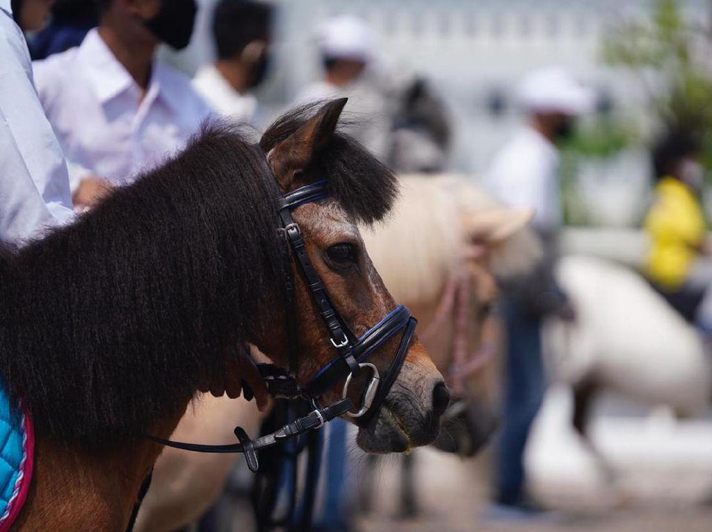 Equinara Pulomas Open 2020, Langkah Awal Memajukan Petensi Kuda Poni