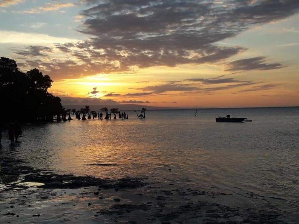 Melihat Mangrove Menari di Pantai Walakiri Sumba