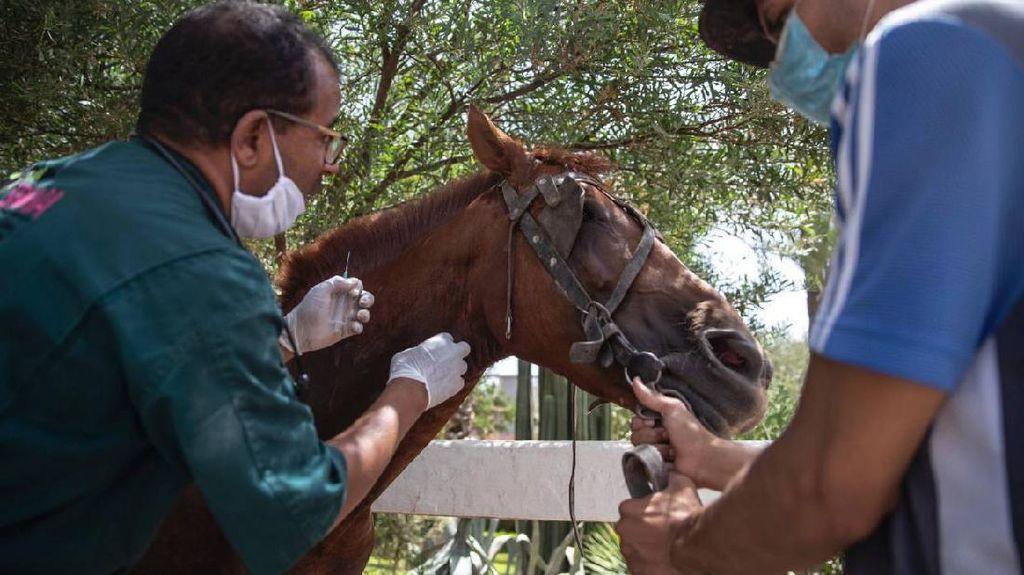 Foto: Kuda-kuda Wisata di Maroko Terancam Mati Kelaparan