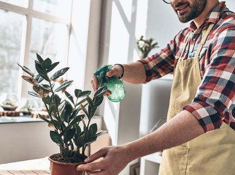Young man taking good care of indoors plant. Indoors gardening concept.