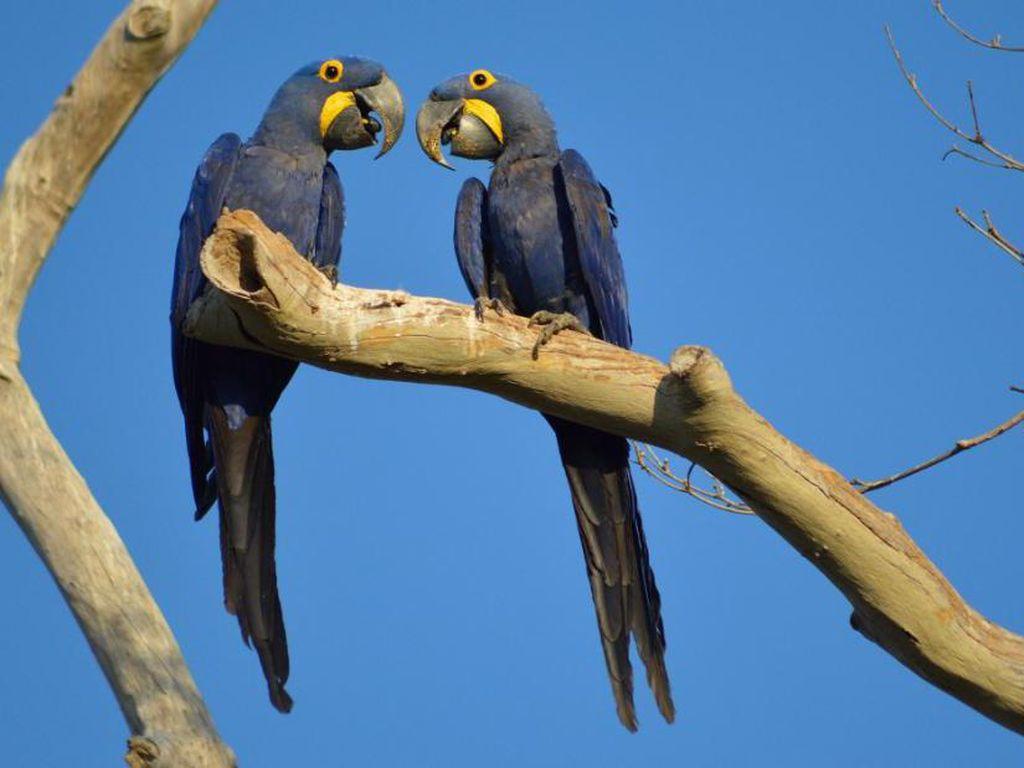 Kebakaran Hutan Menghancurkan Habitat Burung Paling Langka di Dunia