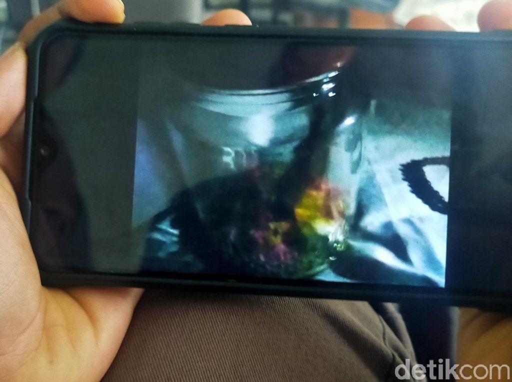 Video Heboh Detik-detik Penangkapan Jenglot di Banyuwangi